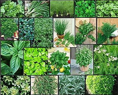HERB Garden Lot ~ 20 Varieties ~ Over 4,435 FRESH Seeds ~ Non GMO -- Lot 3