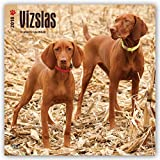 Vizslas 2018 12 x 12 Inch Monthly Square Wall Calendar, Animals Dog Breeds (Multilingual Edition)