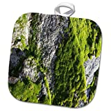3dRose TDSwhite – Rock Photos - Green Moss Sunshine Rock - 8x8 Potholder (phl_281890_1)