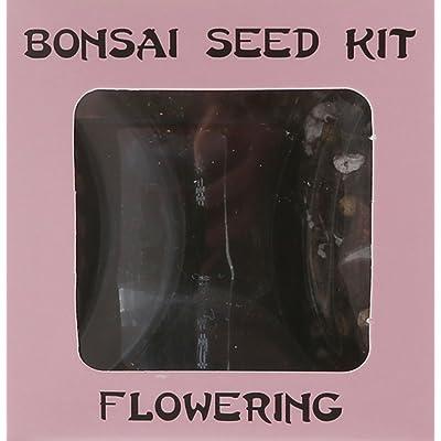 Eve's Jasmine Bonsai Seed Kit, Flowering, Complete Kit to Grow Jasmine Bonsai from Seed : Bonsai Plants : Grocery & Gourmet Food