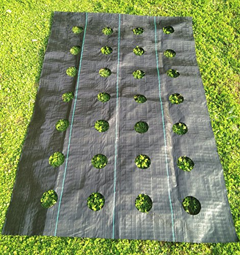 agfabric easy plant weed block mulch weed barrier fabric with planting hole postion hole. Black Bedroom Furniture Sets. Home Design Ideas
