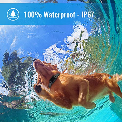Petrainer Shock Collar for Dogs - Waterproof Rechargeable Dog Training E-Collar with 3 Safe Correction Remote Training Modes, Shock, Vibration, Beep