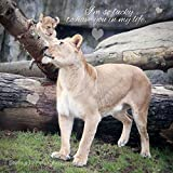 Nursery Wall Art Print Gift for Mom Daughter Son Unframed Lion Photography for Animal Lover Baby Cub Photo Mother's Day 5x5 8x8 10x10 12x12 16x16 20x20 24x24