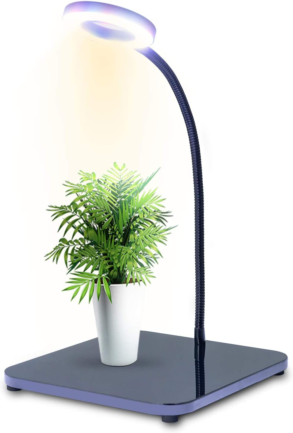 Grow Light for Indoor Plants Red Blue White Spectrum LED Plant Grow Lamp with Adjustable Gooseneck Auto Off 3/6/12/24Hrs Timer Seedling Blooming Office Mini Grow Light,Black,40W,QUDO-GL-01BL
