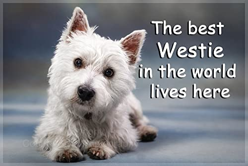 Westie rules it 39 s mine 39 dog breed fridge magnet ideal present gift kitchen - Pictures of westie dogs ...