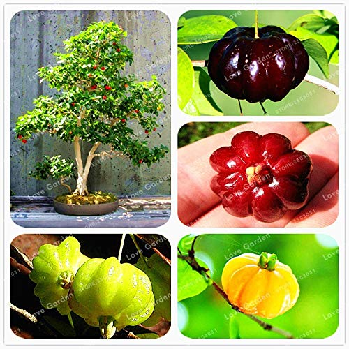 10pcs/Bag surinam Cherry Seeds Balcony Garden Fruit Seeds Potted Plant Seeds Green Cherry Organic Fruits Flower Garden Plant: Mix ()