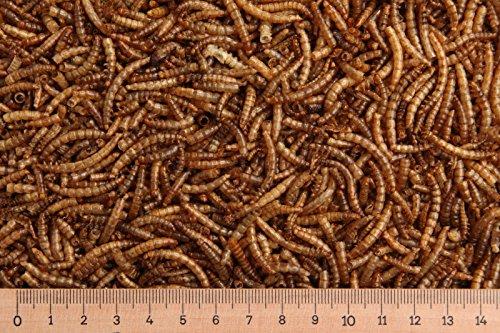 (Grundpreis 9,90 Euro/kg) - 10,0 kg Mehlwürmer getrocknet, Vogelfutter, Nager MD Mealworms