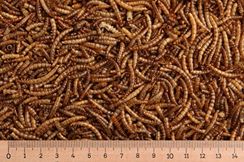 (Grundpreis 10,40 Euro/kg) - 5,0 kg Mehlwürmer getrocknet, Reptilienfutter, Nager MD Mealworms