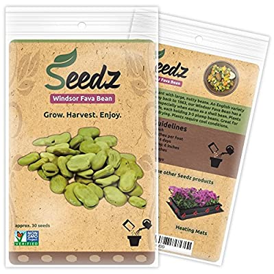 CERTIFIED ORGANIC SEEDS (Appr. 30) - Windsor Fava Bean Seeds - Open Pollinated Vegetable Seeds - Organic, Non Hybrid Garden Seeds - USA
