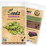 CERTIFIED ORGANIC SEEDS (Appr. 30) - Windsor Fava Bean Seeds - Open Pollinated Vegetable Seeds - Organic, Non Hybrid Garden Seeds - USA