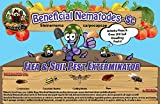 250 Million Live Beneficial Nematodes Sc - Flea and Fly Exterminator