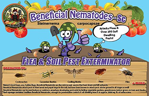 250 Million Live Beneficial Nematodes Sc - Flea and Fly Exterminator by Bug Sales