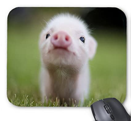 Adorable Appearance Small Size Cute Baby Teacup Pigs Mouse Pad