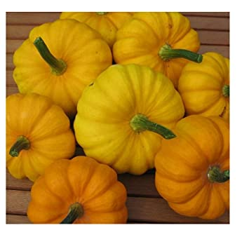 5 seeds Pumpkin F1 Sunlight Vegetable