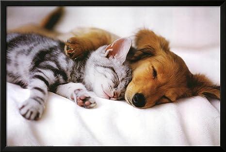 Amazon.com: Cuddles (Dormir perrito y gatito) Póster Póster ...