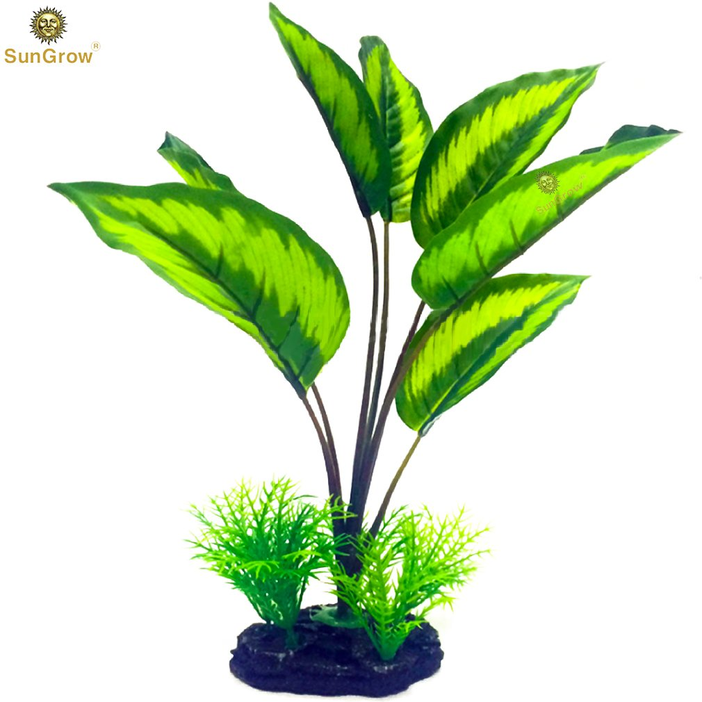 Low-maintenance Amazon Sword Plant -- Serves as Betta resting area - Provides Hiding spot for the young - Adds security in a Breeding Tank - Creates beautiful aquatic background decor