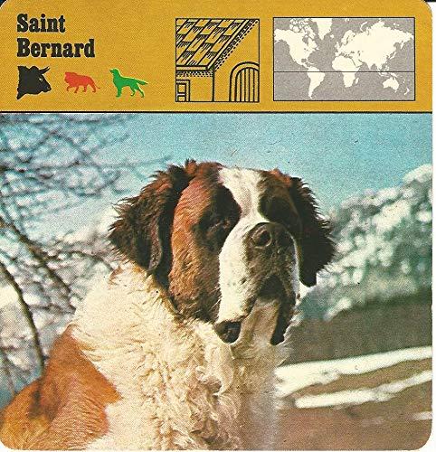 1975 Editions Rencontre, Animals Card, 02.31 Saint Bernard, Dog