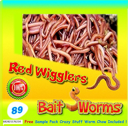 Red Wigglers (89 Count) Live, Healthy Red Worms for Composting & Fishing Bait