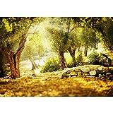 Non-woven photo wallpaper 350x245 cm PREMIUM PLUS Wall Mural Photo Wallpaper Picture - Forest Sun Stones - no. 265