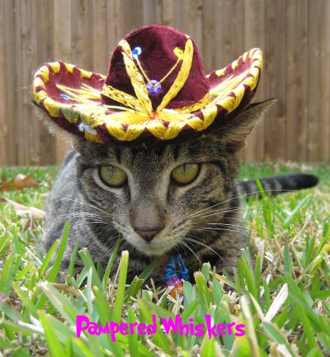 - Pampered Whiskers Sassy Sangria Miniature Sombrero for Cats and Dogs
