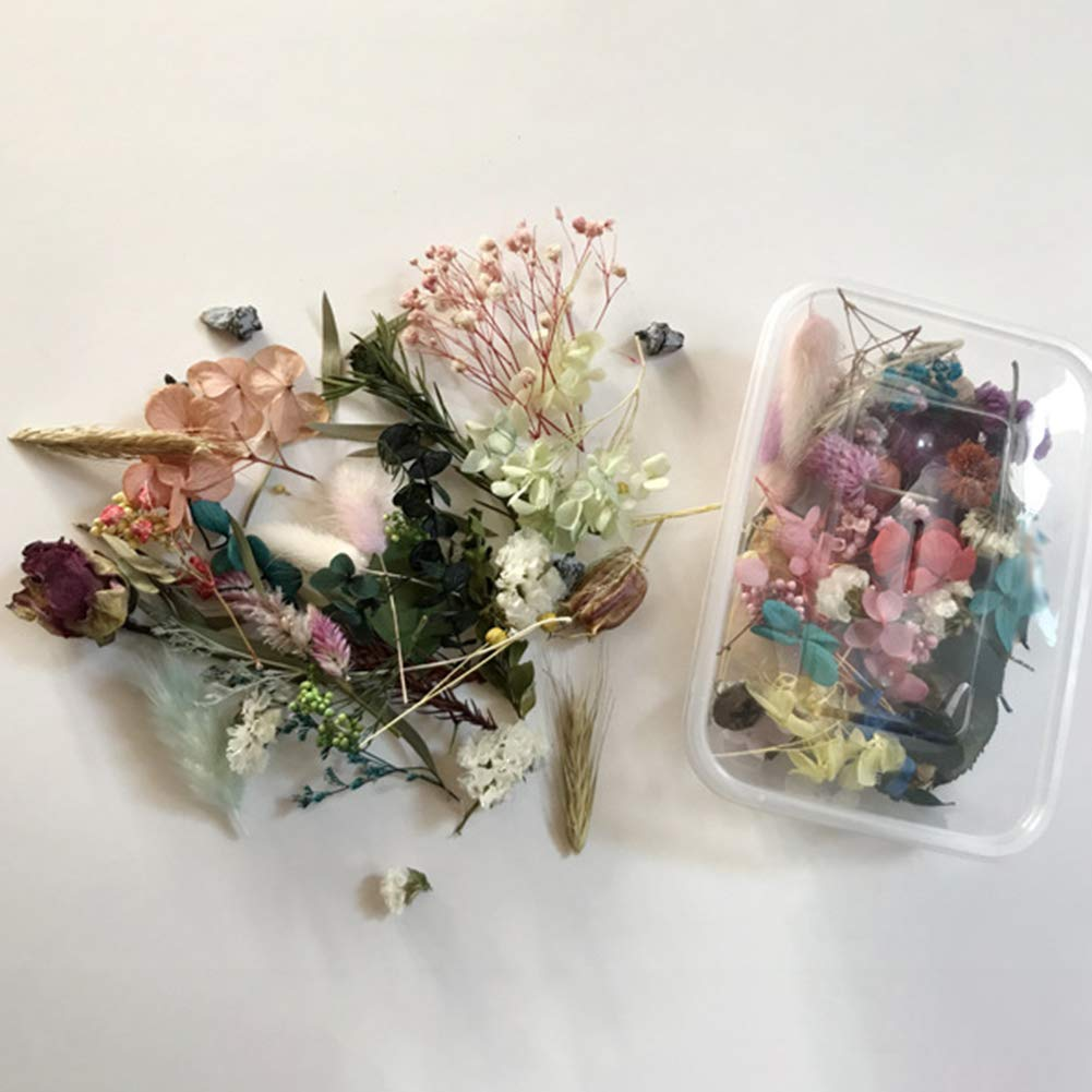 BrawljRORty Artificial Flowers Simulation Flowers 1 Box Preserved Dried Flower Plant DIY Candle Resin Jewelry Making Craft Decor Baby Shower Home Decorations