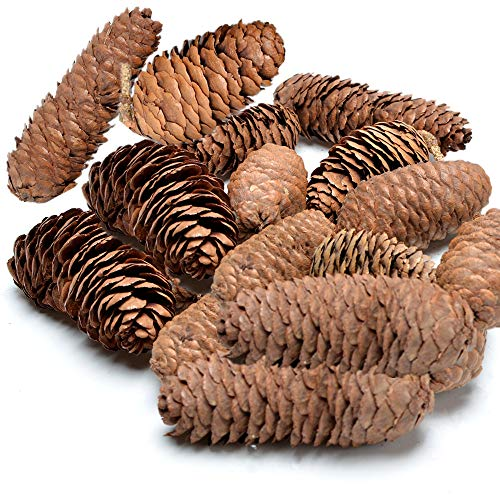Byher 20 Pinecones in Bulk for Crafts Decorative Natural Pine Cones for Christmas Hanging Ornaments Bowl Vase Fillers ()