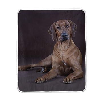Amazon.com: My Daily Rhodesian Ridgeback Dog Throw Blanket Polyester ...