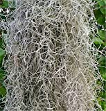 Spanish Moss - 5 lb box - Florist Supplies