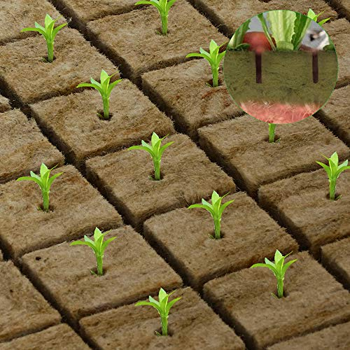 GROWNEER 1.5x1.5x1.5 Inches Rockwool Starter Plugs Grow Cubes Starter Sheet Grow Media (49 Plugs) Perfect for Cuttings, Cloning, Plant Propagation, Seed Starting, Hydroponic