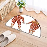 NALAHOMEQQ Entry Doormat Male and Female muscular skeletal system isolated on a white background .Part of a muscle medical series Entryway Half Moon Door Mat(35.4x23.6 INCH)