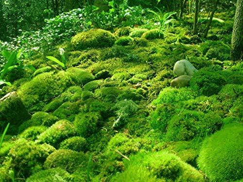 GEOPONICS 1x1 Fe de LiveFor Reptles terrarios Fairy Jardines y Jardines del Plato: Amazon.es: Productos para mascotas