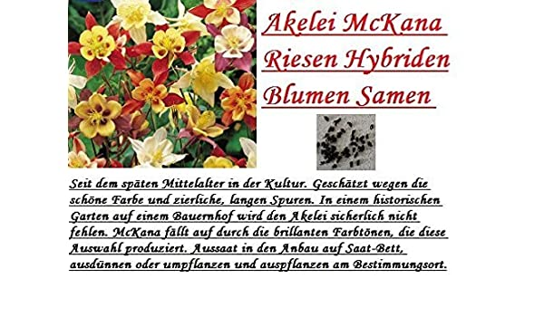 Amazon.com : 30x Akelei McKana Riesen Hybriden bunt Blumen Samen ...