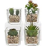 Arte Pianta in vaso Cactus