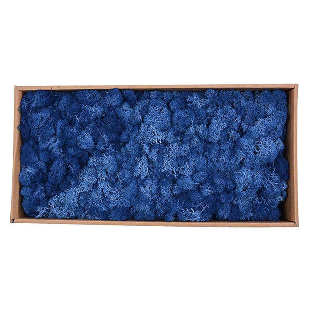 B Blesiya Natural Norwegian Reindeer Moss Preserved Dried Crafts Flower Stamen DIY Micro Landscape Decoration - Dark Blue