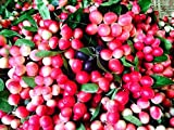 0 Thai Carissa Carandas Seeds,Very Rare Exotic Lime Berry,Karonda Carunda Fruit