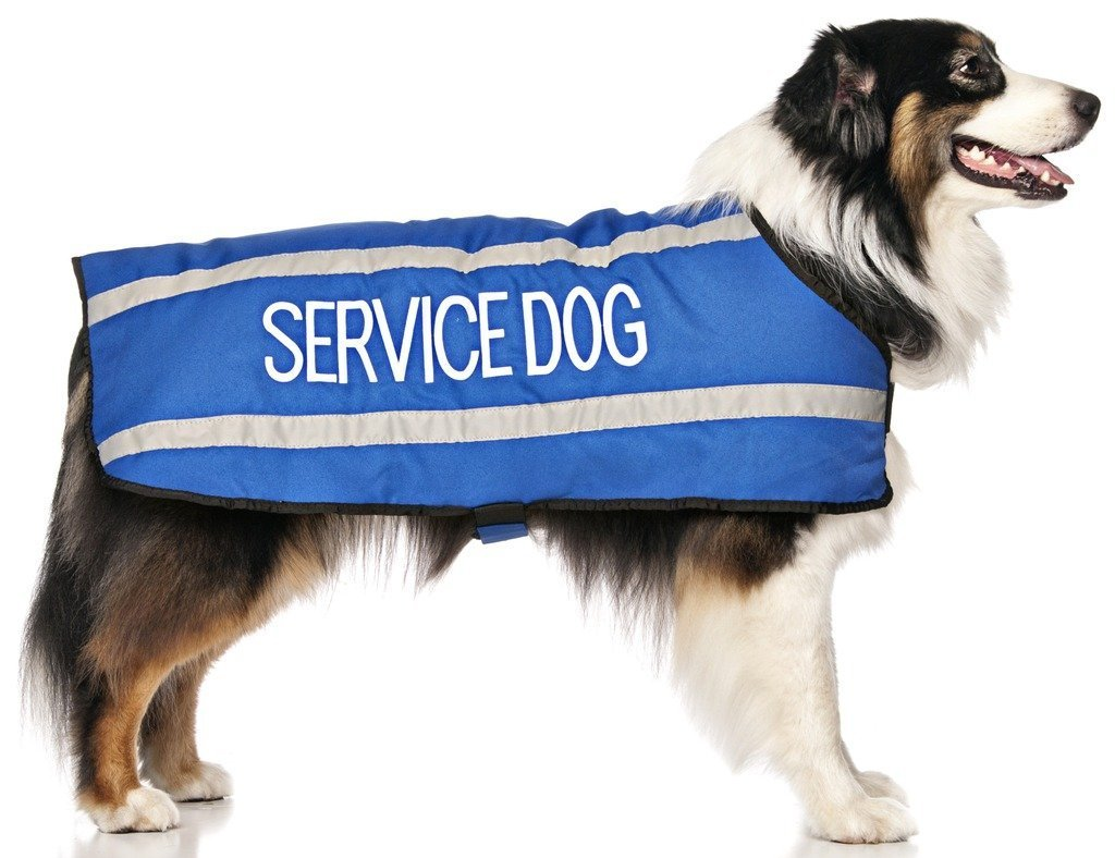 L-XL Back 23\ Service Dog bluee Warm Dog Coats S-M M-L L-XL Waterproof Reflective Fleece Lined (Do Not Disturb) Prevents Accidents by Warning Others of Your Dog in Advance (L-XL Back 23  (59cm)