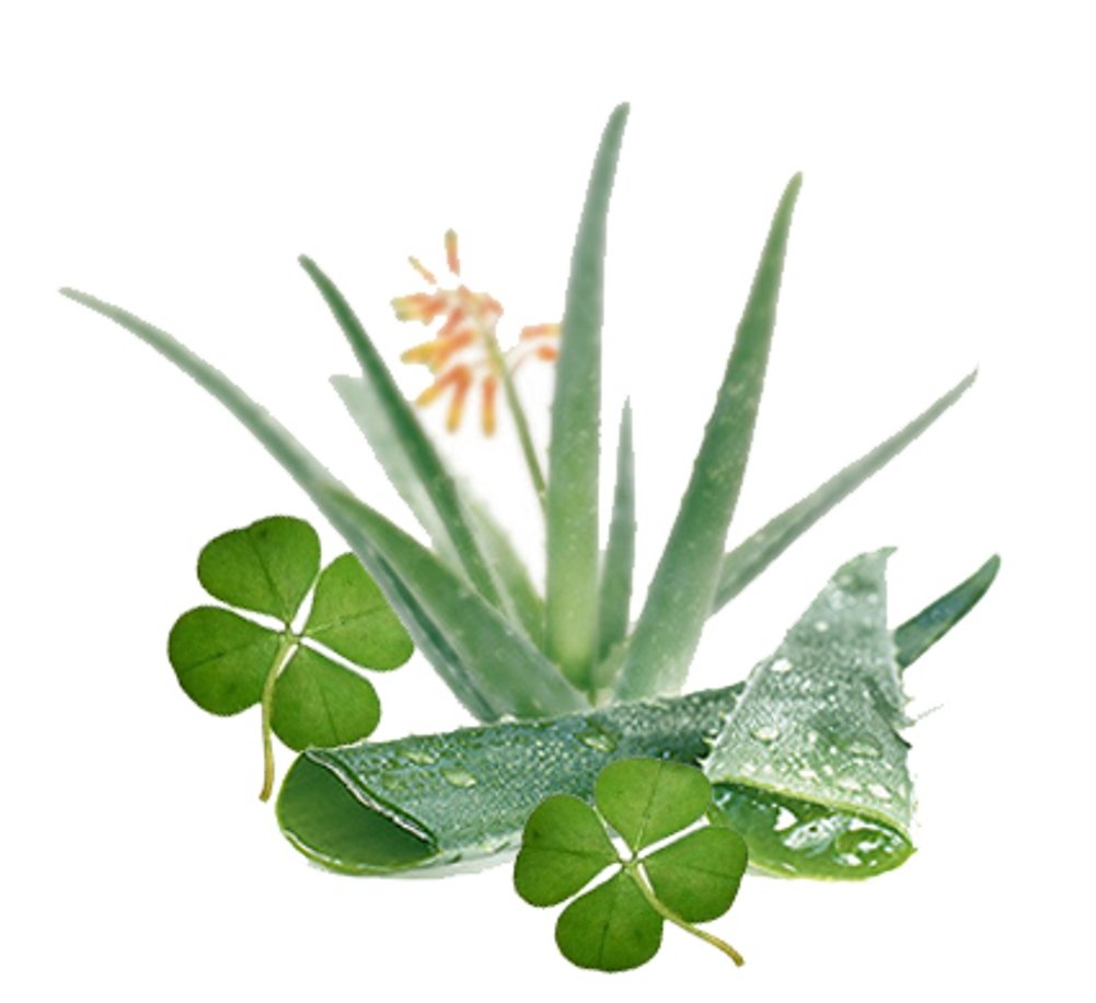 1 oz Candle Soap Home Fragrance Oil-Green Clover & Aloe