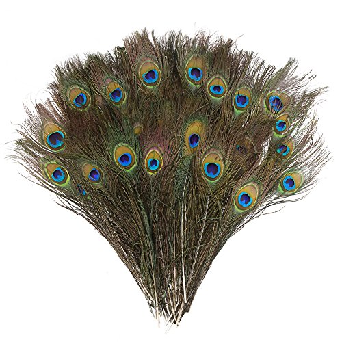 DECORA 100 Pieces Real Natural Peacock Feathers for Craft Halloween Costume Bridesmaid Corsage Christmas Wreath and Home Decor 10 Inch-12 inch ()
