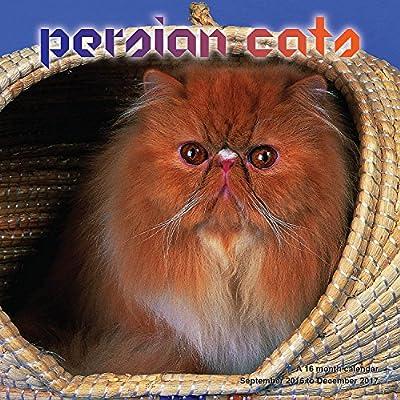 Persian Cat Calendar - 2017 Wall calendars - Cat Calendars - Kitten Calendar - Monthly Wall Calendar by Magnum