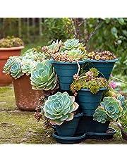 200 Pcs Sale!Hens and Chicks Succulent Mix Seeds (Sempervivum Hybridum) Bonsai Plant Flower Seeds for Home Garden