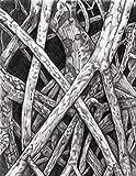 ''Mangrove I'' Drawing by Dawn Rosendahl ~Original Pencil Drawing