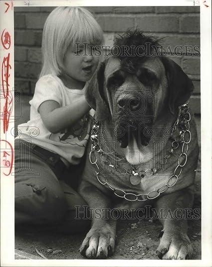 Amazon com: Vintage Photos Historic Images 1983 Press Photo Alexis