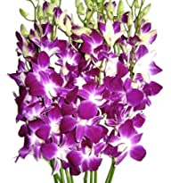 Just Orchids – Premium Long Stem Purple Dendrobium