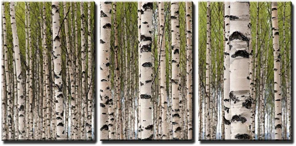 Amazon Com Wall26 3 Piece Canvas Wall Art Grove Of Birch Trees With Green Leaves In Spring Modern Home Art Stretched And Framed Ready To Hang 16 X24 X3 Panels Posters