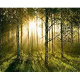 Birch Glory HUGE Wall Mural 12ft 6in Wide x 9ft High