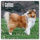 Collies 2018 12 x 12 Inch Monthly Square Wall Calendar, Animals Dog Breeds Collies (Multilingual Edition)