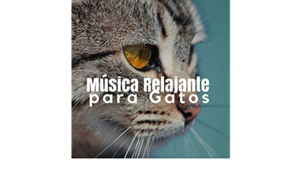 Música Relajante para Gatos  Sonidos de la Naturaleza y Música Calma para Relajar Gatos y Gatitos Inquietos by Paraíso Secreto & Pet Care Music Therapy on ...