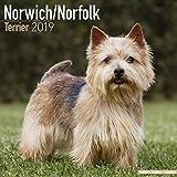 Norwich/Norfolk Terrier Calendar - Dog Breed Calendars - 2018 - 2019 Wall Calendars - 16 Month by Avonside