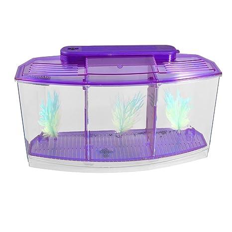 PriMI: Lámpara LED de plástico transparente con batería para escritorio y acuario (morado)