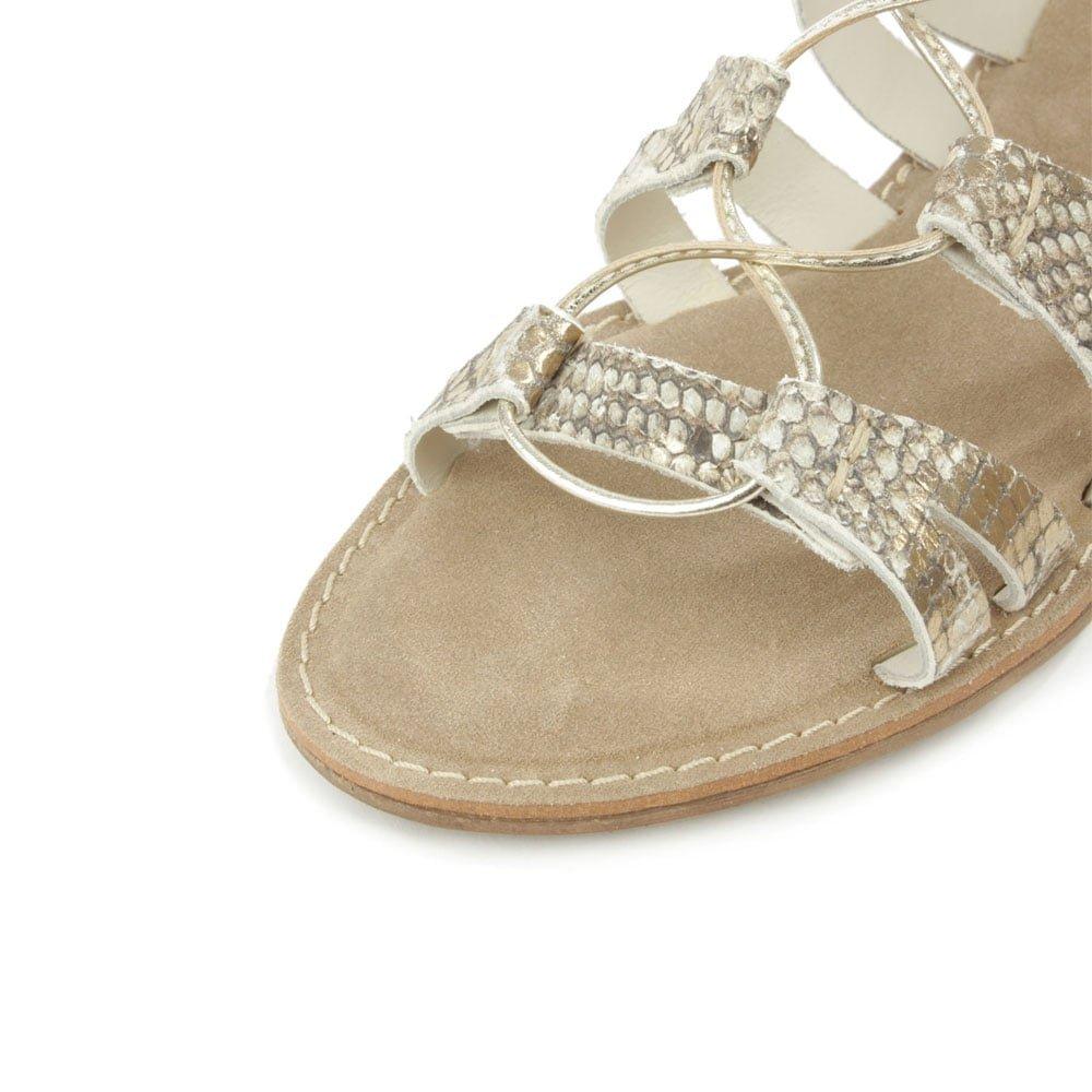 4af2e8ca6c7ed Daniel Honey Brook Gold Leather Reptile Gladiator Sandal 41 Gold Reptile   Amazon.co.uk  Shoes   Bags